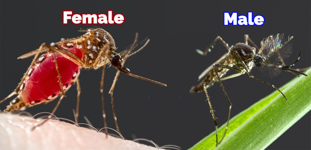 male female mosquito lakeland superior spray