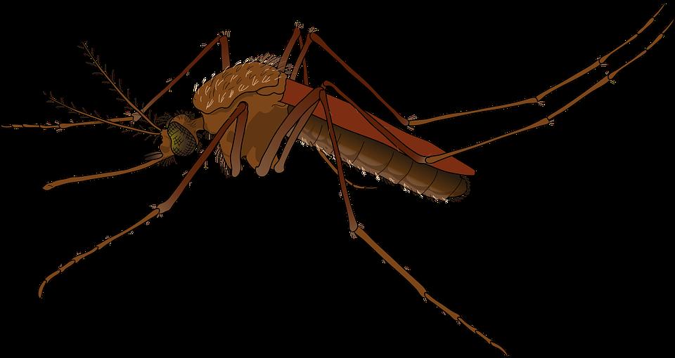 mosquito lakeland bartow