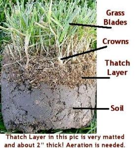 thatch layer buildup st augustin grass
