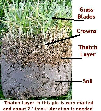 thatch layer buildup st augustin grass