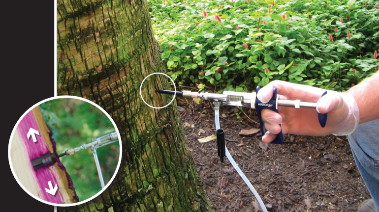 Arborjet injections for perfect tree - Superior Spray
