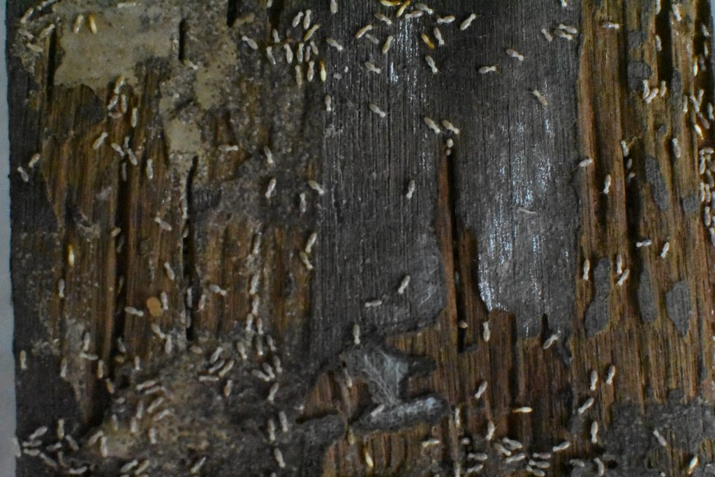 what you should know about termites damage wood floor