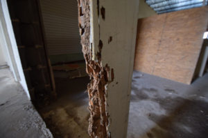 know about termites damage