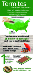 FREE termite inspections - Facts you should know about Termites infographic