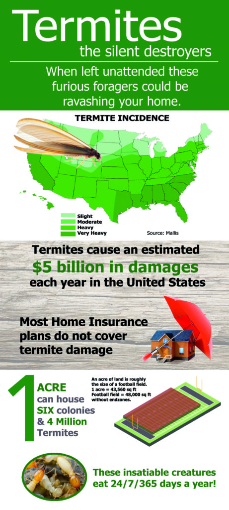 Facts you should know about Termites infographic
