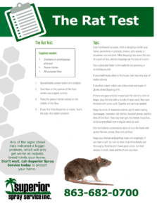 Do I have rats Do I have mice Get rid of rats Superior Spray