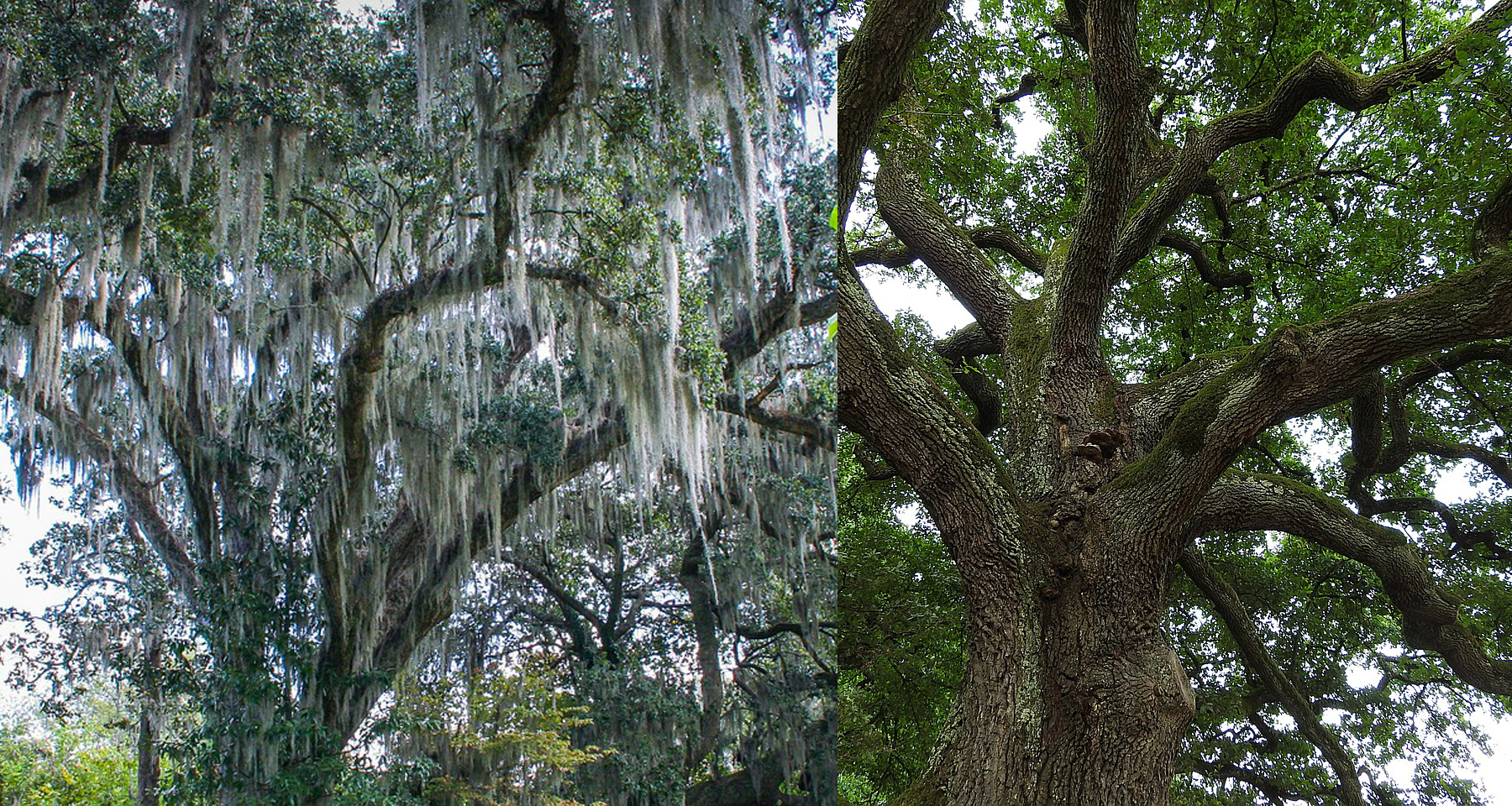 If You Feel Moss Is Crowding Your Trees Or Making A Slow And Unwelcome Earance It S Time To Call Superior Spray Service We Have Variety Of Diffe