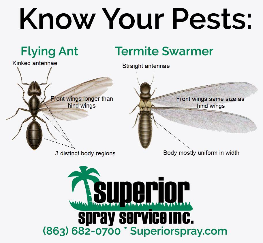prevent termite budding