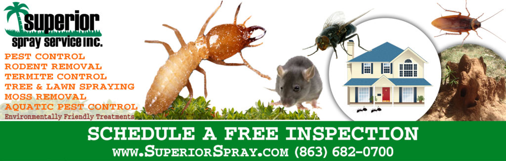 prevent termite budding swarming free inspection