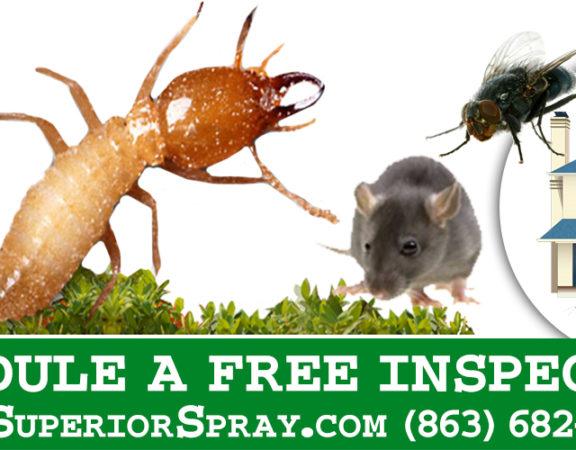 prevent termite budding swarming free inspection