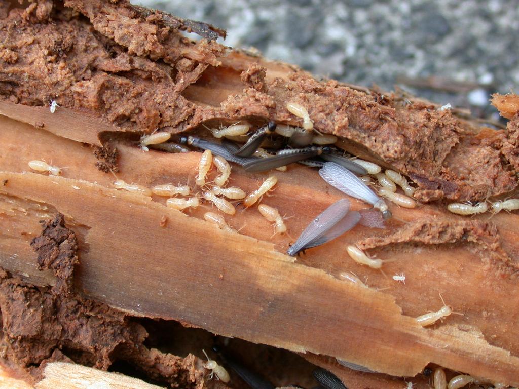 terrified of termites