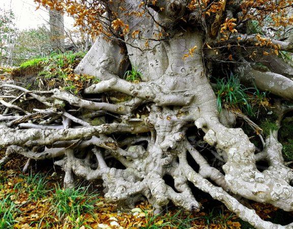 root girdling