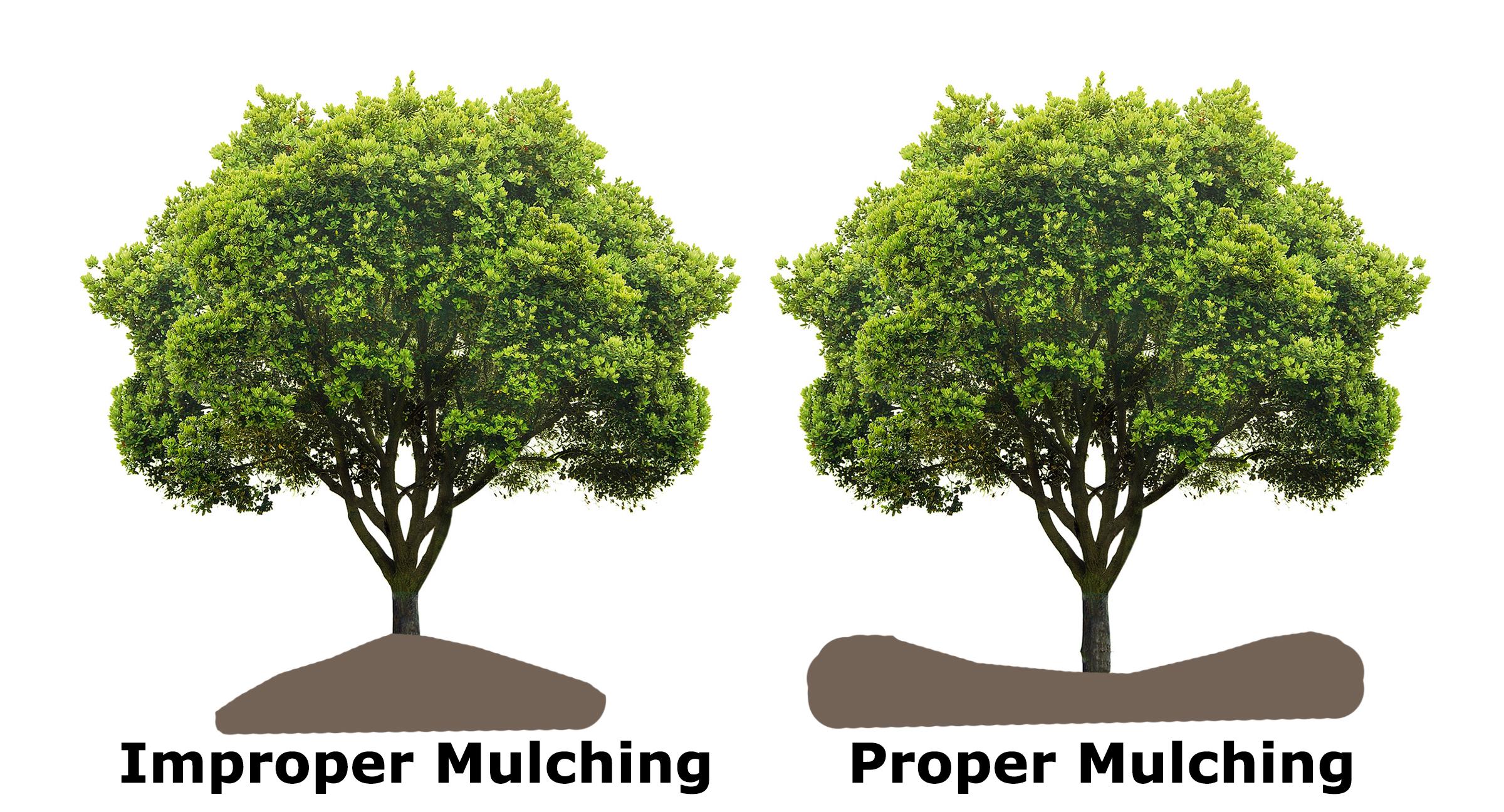root girdling mulch volcano