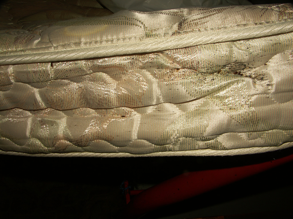 Bed Bug Mattress disgusting pest