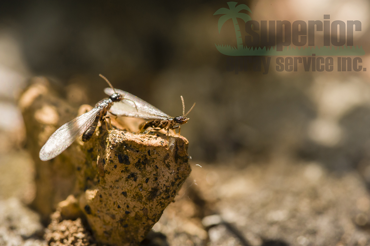 leave treating termites to the professionals