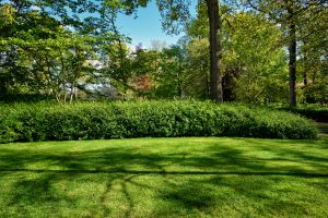 give your lawn new life