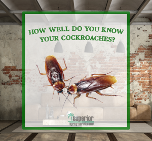 Identify Cockroaches Superior Spray Service Florida