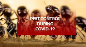 Pest control during COVID-19