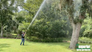 Spanish Moss Removal Florida Superior Spray Service