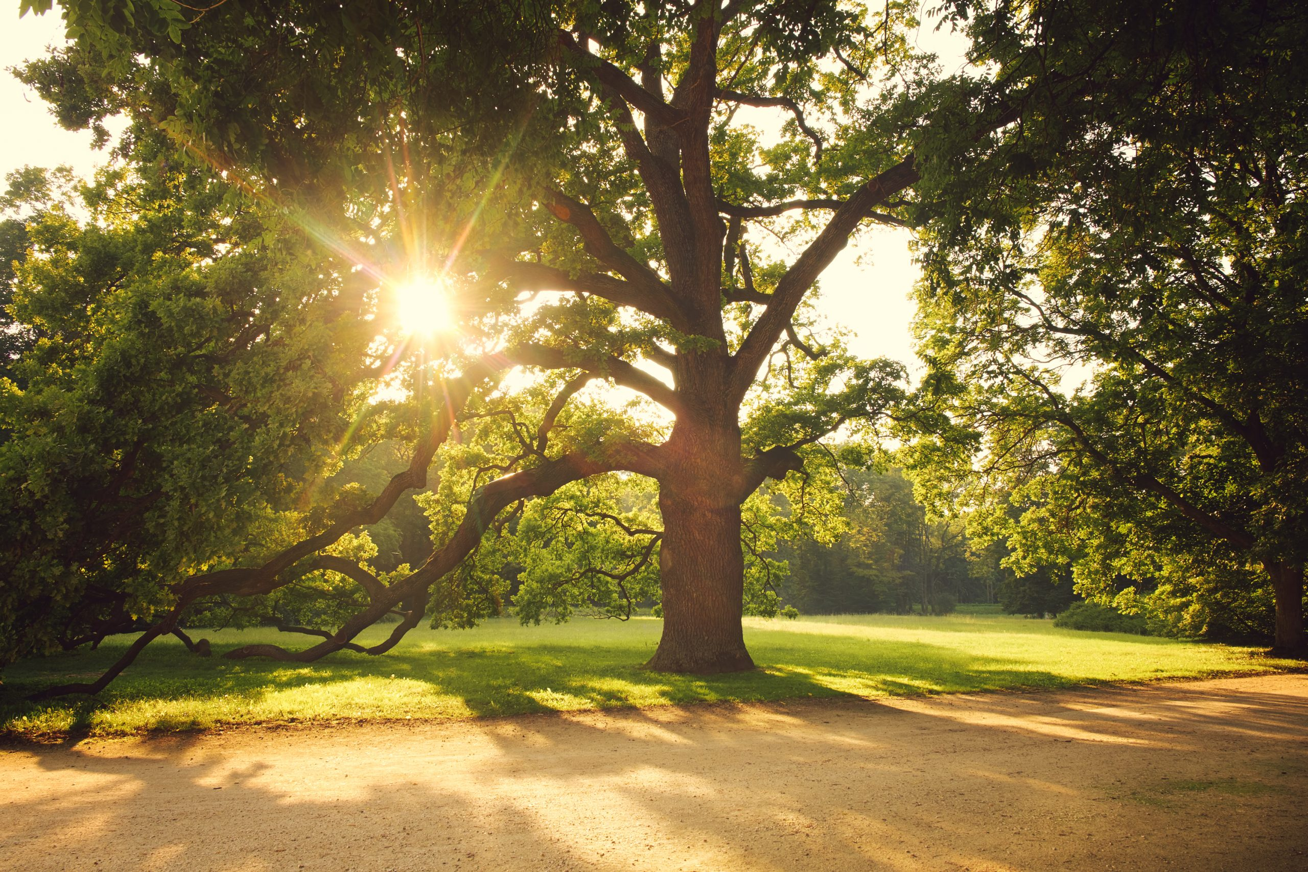 tree risk assessments central florida Superior Spray Service