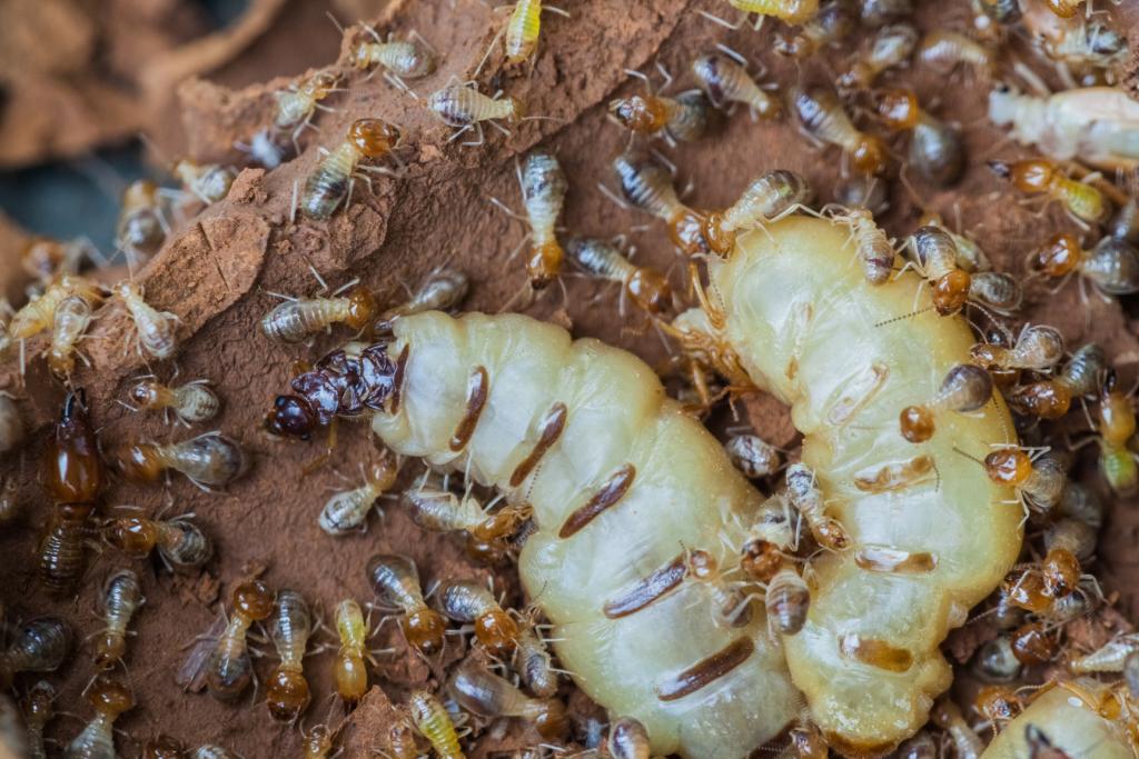 What Termites Look Like